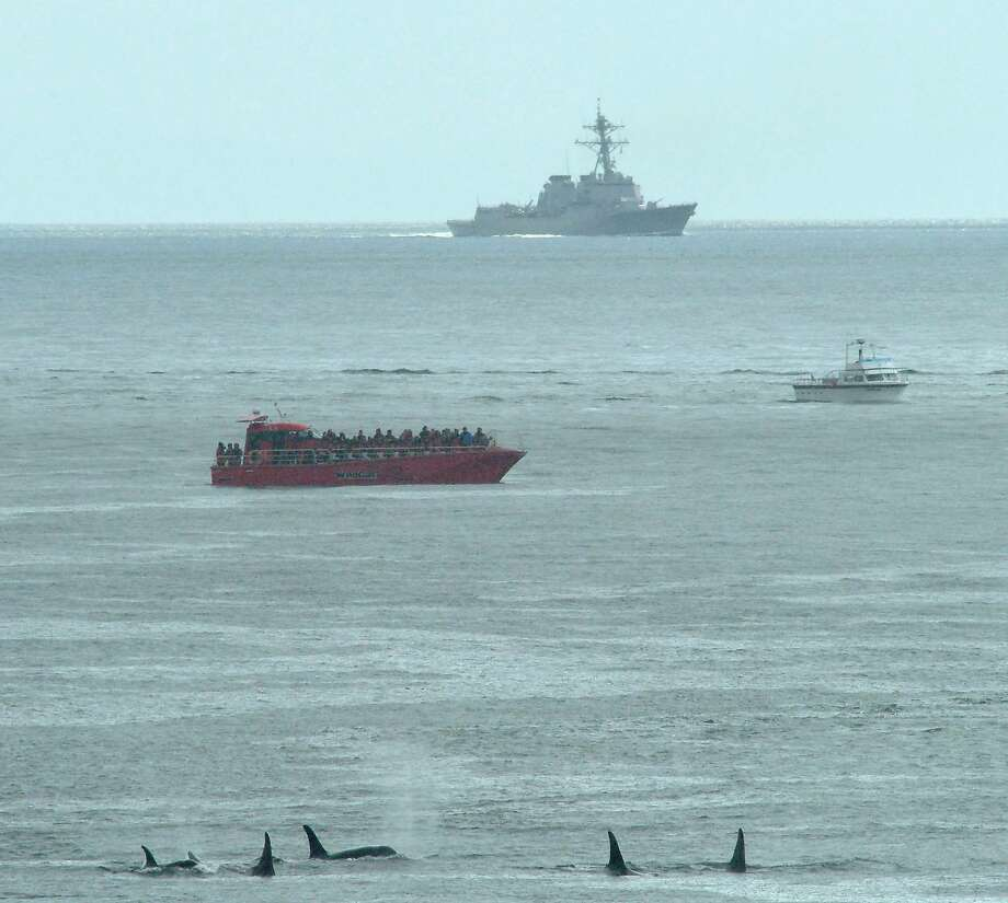 Killer whales swim near a whale-watching boat and the U.S. destroyer Shoup off San Juan Island, Wash. Photo: KEN BALCOMB, Associated Press