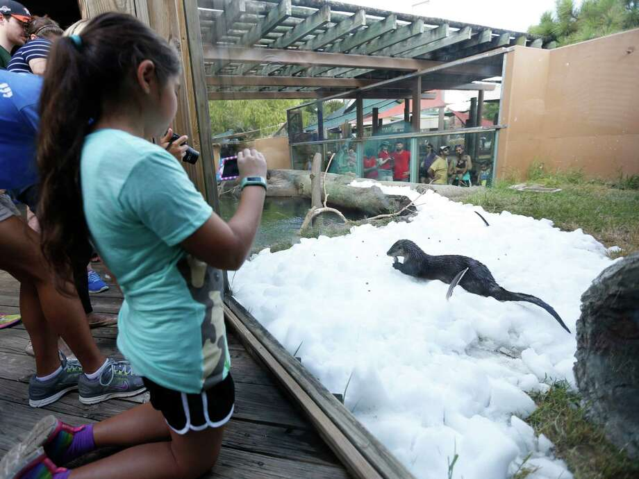 Cecilia Carpenter, 10, takes a photo of Bell, a North American river otter, as she played in the ice during Snow Day at the Houston Zoo, Saturday, July 16, 2016, in Houston, provided by  TXU Energy. Photo: Karen Warren, Houston Chronicle / © 2016 Houston Chronicle