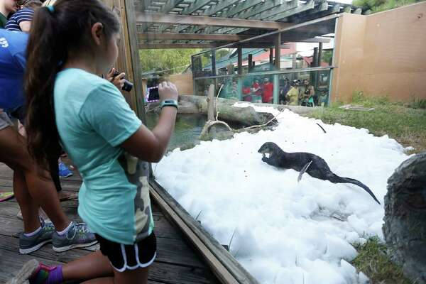 Cecilia Carpenter, 10, takes a photo of Bell, a North American river otter, as she played in the ice during Snow Day at the Houston Zoo, Saturday, July 16, 2016, in Houston, provided by  TXU Energy.