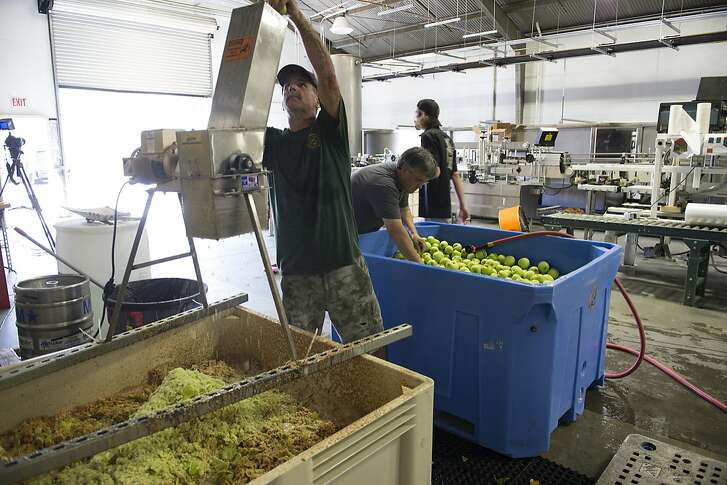 Pressing apples during cider production at Sonoma Cider. Sonoma Cider apple harvest, Healdsburg, California