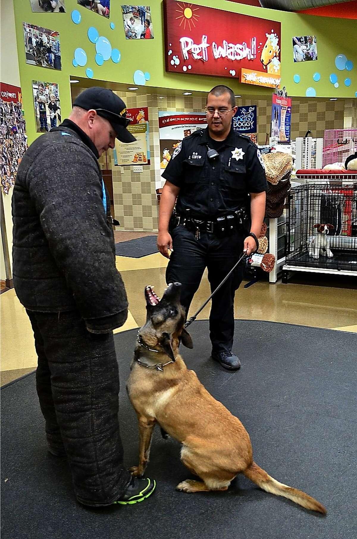 K9 Sheyna and handler Officer Joe Coffin. K9 Sheyna was injured Saturday night in police action in Walnut Creek.