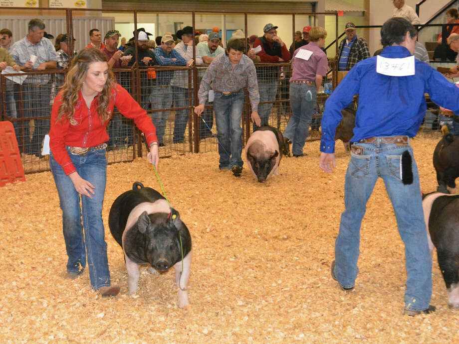 Sarah Berry, a member of Cotton Center 4-H, tries to attract the attention of swine judge Joe Bonny LaCompte as she herds her Hampshire pig around the show ring Sunday during the 80th annual Hale County Stock Show. A total of 465 animals were entered in this year's contest, which concluded Monday night with the premium auction.