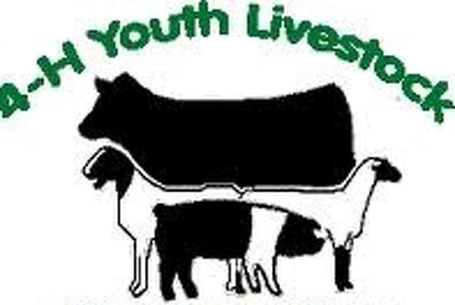4-H livestock