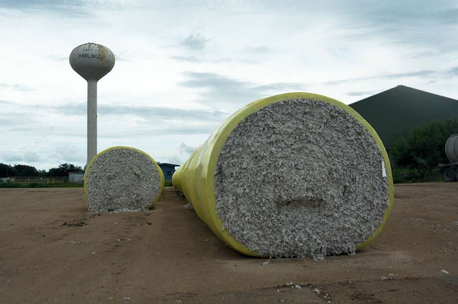 Rod Santa Ana/Texas A&M AgriLife CommunicationsModular bales of cotton awaited ginning last year at the Port of Harlingen. Low commodity prices could result in more cotton acres planted in the Lower Rio Grande Valley this year.