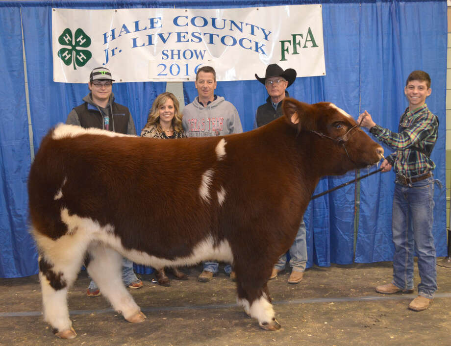 Grand Champion Steer, 81st annual Hale County Stock Show, exhibited by Cole Benson, Hale Center FFA