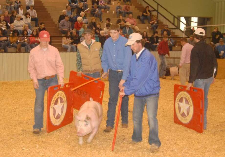 Doug McDonough/Plainview HeraldA pig exhibited by Tyler McGann (center) of Hale Center FFA is escorted out of the show ring and into a hold pen after being placed during Sunday's competition in the 79th Annual Hale County Stock Show. This year's event concluded Monday with the premium auction of championship animals.