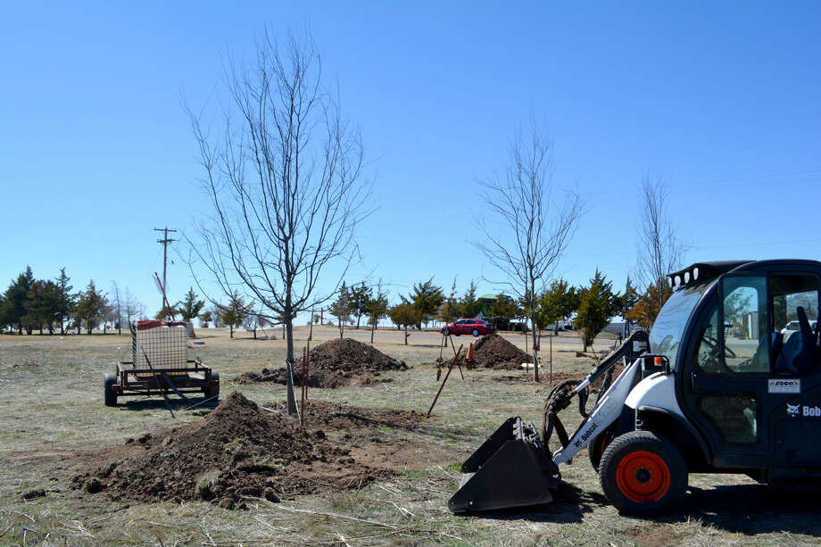 Doug McDonough/Plainview Herald A City Parks Department crew on Wednesday morning planted the first three of almost two dozen hackberry trees that will be placed at the Plainview Point Kill Site south of Fifth Street on Joliet this week. The trees were provide through a grant from the Chapman Forestry Foundation in Lubbock, as part of a planned visitors' center at the nationally recognized archeological site.