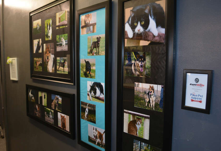 Doug McDonough/Plainview Herald Portraits of some of the dogs and cats that have been featured as Pet of the Week at Paws Pet Adoption of Plainview decorate a wall inside Broadway Brew, 108 E. Seventh. The photos were taken by Rapid Shotz. The Brew will host a gift shower for Paws along with a Coffee 101 course beginning at 5:30 p.m. Sunday.