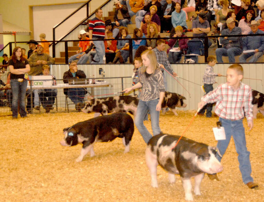 Delaney Nichols from Cotton Center FFA drives her pig Sunday afternoon during the swine portion of the 78th annual Hale County Stock Show. The weekend event concluded Monday with the premium auction. Photo: DOUG McDONOUGH | Plainview Herald