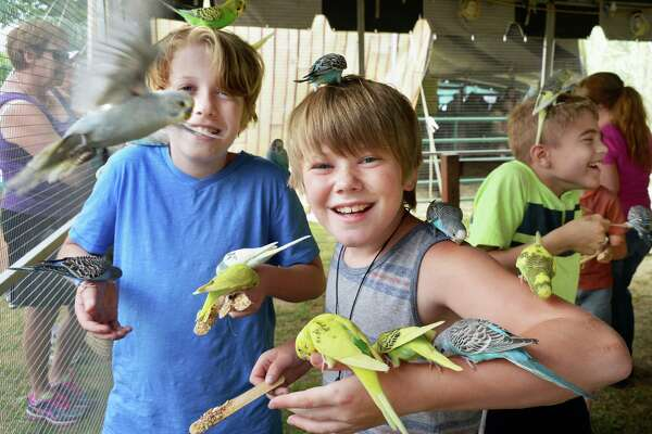 Leyton Hemsworth, left, and Charles Frederick, both 11-years-olds from Saratoga Springs enjoy the Parakeet Adventure on opening day at the Saratoga County Fair Tuesday July 19, 2016 in Ballston Spa, NY.  (John Carl D'Annibale / Times Union)
