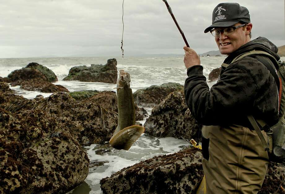 Sea forager Kirk Lombard lands a monkeyface eel along the San Mateo County Coast in 2012. Photo: Michael Macor, SFC