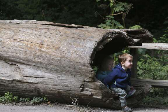 Sebastian Markevich and his sister Lucy emerge from the hollow of a tree at the entrance to Muir Woods National Monument in Mill Valley, Calif. on Wednesday, June 29, 2016. The National Park Service is considering a plan to remove a parking lot and reduce a wide pedestrian area at the entrance to the park and restore the natural habitat along nearby Redwood Creek.