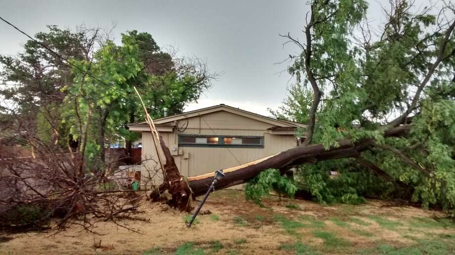 Rosemary Gonzales/Special to the HeraldA 60-year-old tree was uprooted in the back yard of 1601 W. 11th St. about 6:30 p.m. Friday by high winds. Plainview received about a half-inch of rain in the storm.
