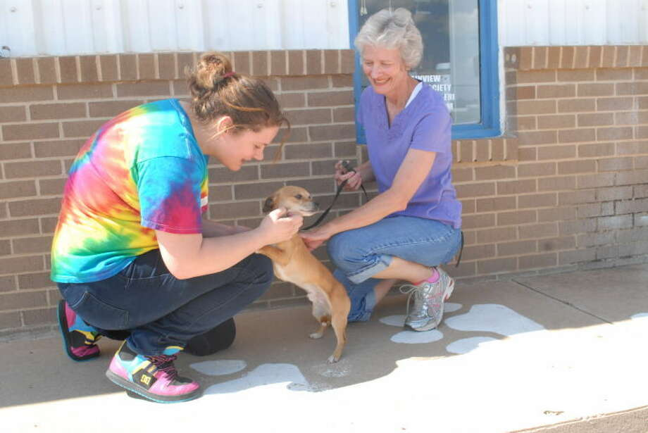 Wayland Baptist University student Angela Vyborny and Paws Pet Adoption of Plainview Director Cynthia Davidson show two-year-old Chihuahua Ace some affection. Photo: Homer Marquez/Plainview Herald