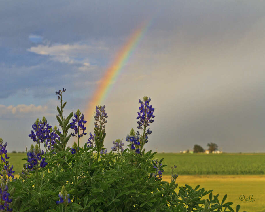 Area resident Connie Barnett captured this scenic shot of a rainbow framed by bluebonnets following a thunderstorm in southwestern Briscoe County earlier this week. Photo: Connie Barnett