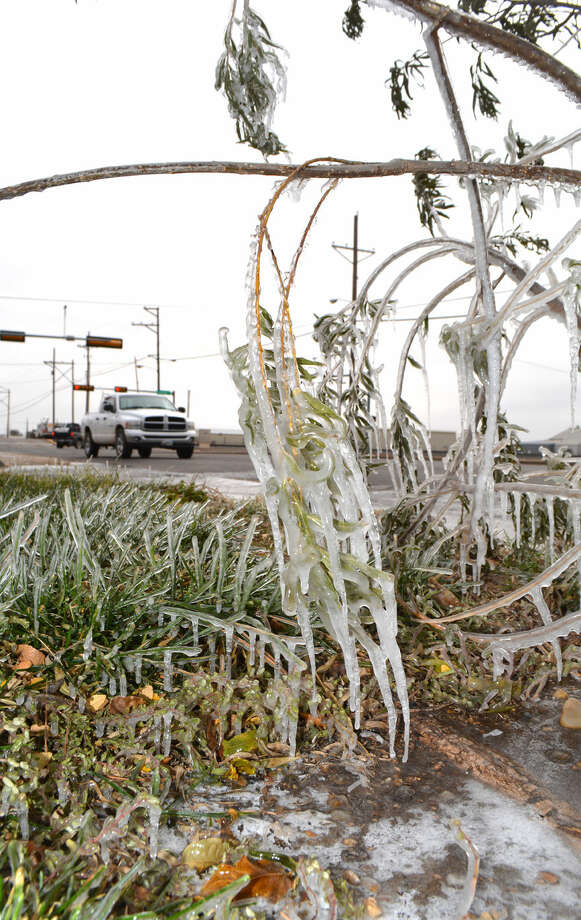 Doug McDonough/Plainview HeraldAutomatic sprinklers combined with freezing temperatures left a coating of ice on tree branches and grass Thursday morning outside Amigos Supermarket at 24th and Columbia.