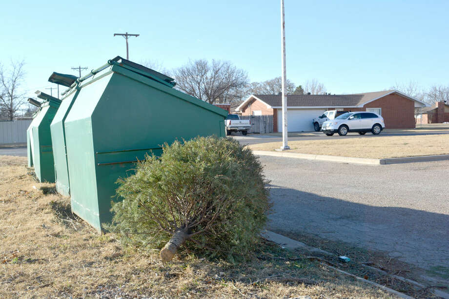 Doug McDonough/Plainview HeraldA discarded Christmas tree is left beside the green boxes for leaves and grass clippings near the city's water treatment plant at 16th and Holliday on Friday. The city has designated five drop-off sites for trees, but would prefer they are bought to the city landfill to be processed into mulch.