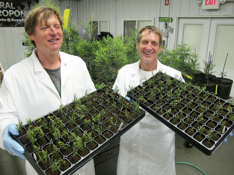 Tom Brodhagen (left) and Jim Clark hold shows trays of freshly planted tips of cuttings from giant sequoia trees at the Archangel Ancient Tree Archive laboratory in Copemish, Mich. Photo: John Flesher, Associated Press