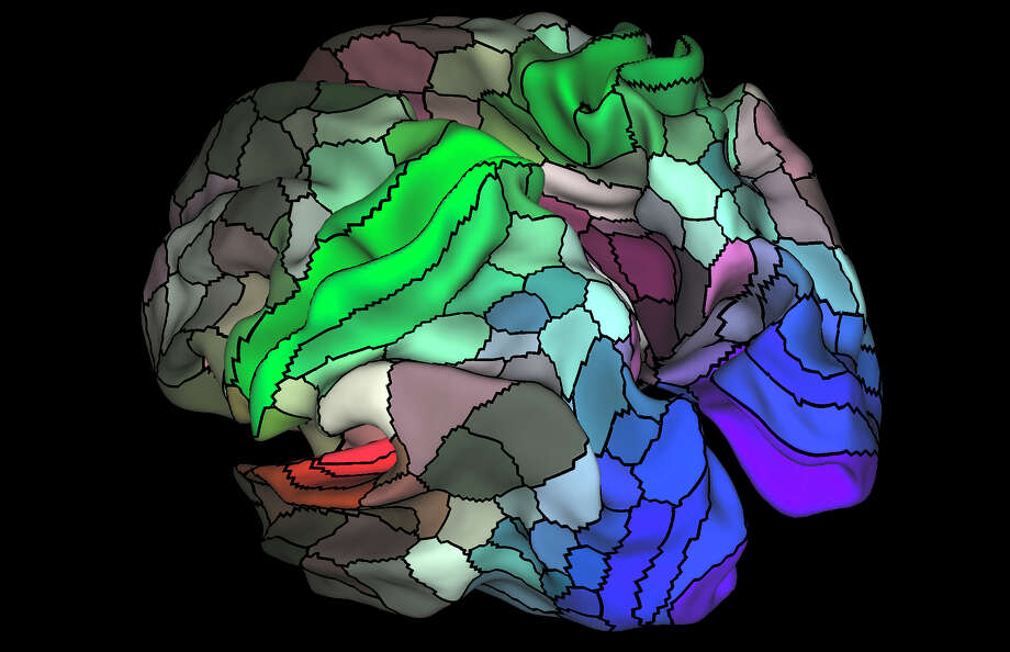 Many experts are calling a new map of the brain based on scan data a milestone in neuroscience and an unprecedented glimpse into the machinery of the human mind. Photo: MATTHEW F. GLASSER, DAVID C. VAN ESSEN / Matthew F. Glasser, David C. Van Essen / New York Times / MATTHEW F. GLASSER, DAVID C. VAN ESSEN