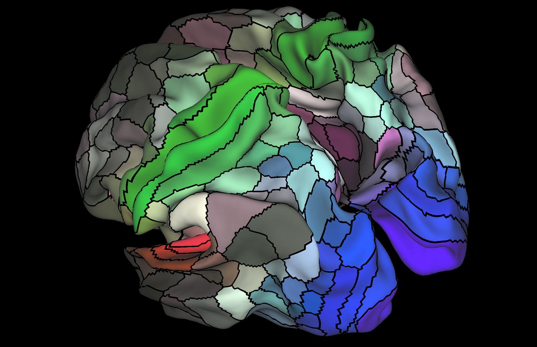 Updated Brain Map Identifies Nearly 100 New Regions Sfgate