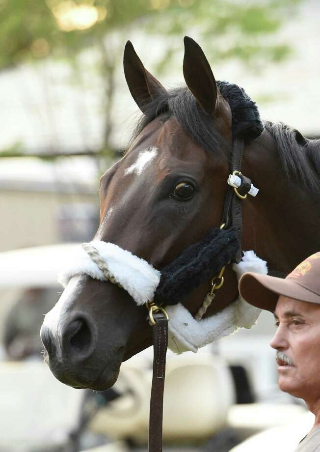 Songbird with groom Cesear Orantes get their first look at the Saratoga Race Course after arriving from an all-day plane ride from California Wednesday July 20, 2016  arriving in Saratoga Springs, N.Y.   (Skip Dickstein/Times Union) Photo: SKIP DICKSTEIN
