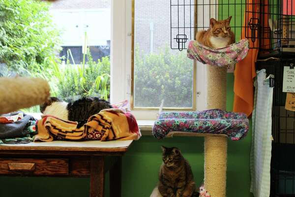 Animals in Distress is a free-roaming shelter, so cats have the freedom to move as they please once they're acclimated.