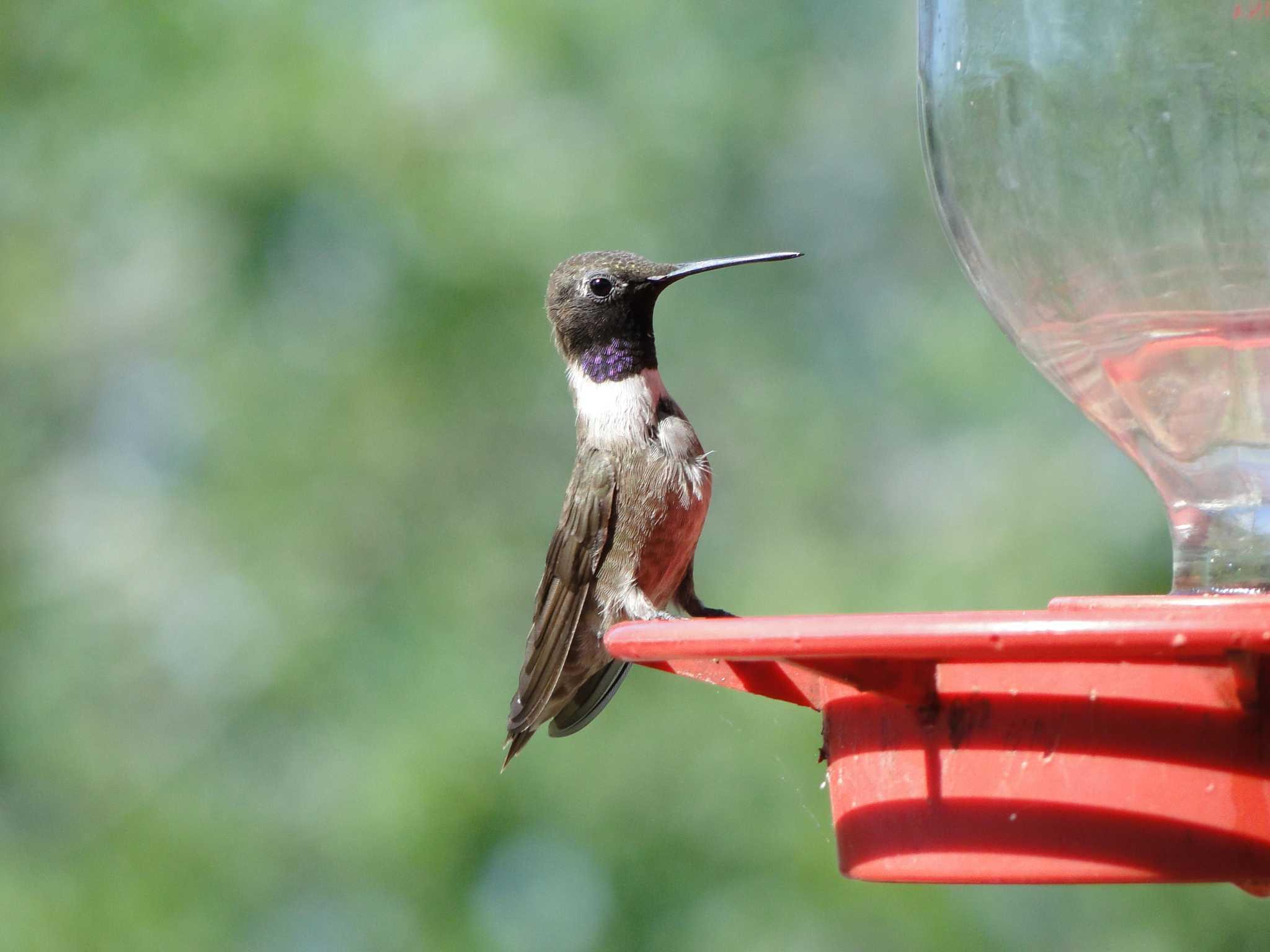 birdfeeder craft homemade glue milk paint and feeder jug sticks one carton bird gallon pin green hummingbird backyard