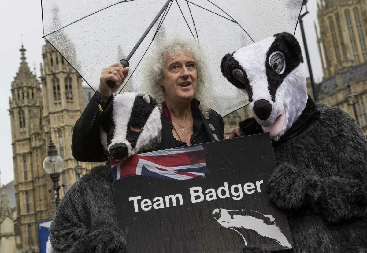 Happy the Elephant can boast of having Former Queen guitarist Brian May's backing in the pachyderm's bid for legal recognition. In this photo, May poses with people dressed as Badgers during a photocall on July 12, 2016 in London, England. The event was organised to 'urge' the government to abandon their planned Badger Cull which is to be rolled out in the Autumn. (Photo by Dan Kitwood/Getty Images)
