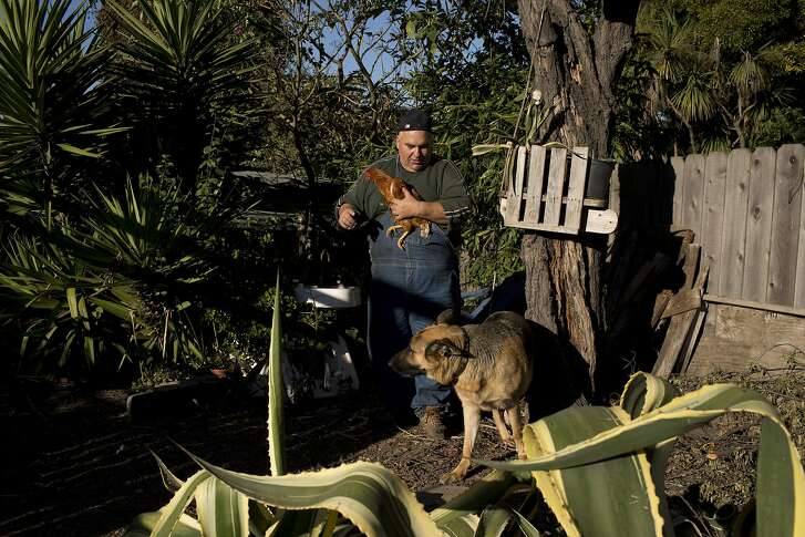 Tony Fazule holds a chicken in his backyard with his 2-year-old German Shepard Smokey after work on Friday, July 22, 2016 in Oakland, Calif. Fazule has run his business, Fazule & Sons Plumbing, in Oakland for 15 years.