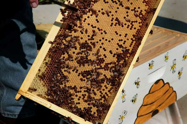 Monsanto scientists think they can help the nation's bee population by tailoring a treatment with far more specificity than synthetic chemicals, one that uses the language of DNA to target genes unique to only to the varroa mite, the Asian parasite feeding off them.
