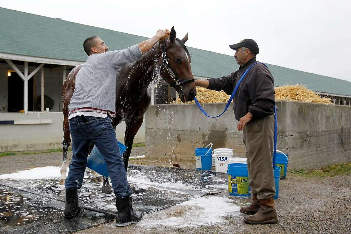 LOUISVILLE, KY - APRIL 26: Kentucky Derby favorite Lookin at Lucky is bathed by groom Martin Campuzano and held by hot walker Jose Moralles after morning exercise at Churchill Downs on April 26, 2010 in Louisville, Kentucky. (Photo by Matthew Stockman/Getty Images) *** Local Caption *** Lookin at Lucky;Jose Moralles;Martin Campuzano