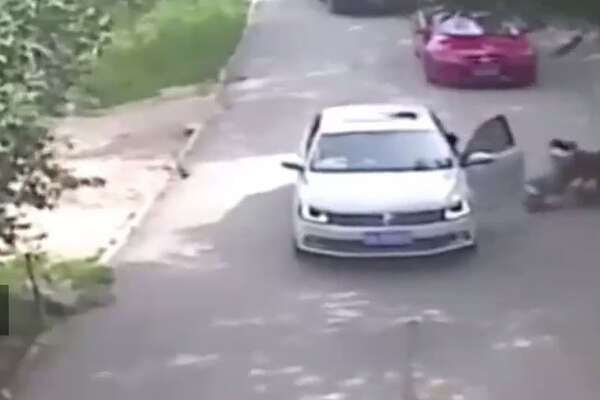 Siberian tigers at a wildlife park in Beijing mauled a woman to death and wounded another when they stepped out of their car in an enclosure, a Chinese state-run newspaper said. Source: (Baby Caring on Youtube )