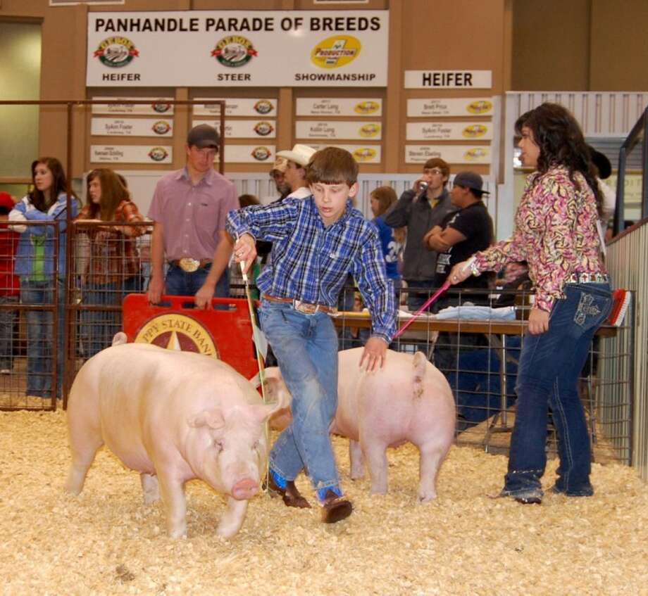 Doug McDonough/Plainview HeraldBryce Reese of Plainview 4-H drives his gilt during Sunday's swine show at the 77th annual Hale County Stock Show. His pig took fifth place in its White Other Purebred Breeds class. The stock show concludes at 6 p.m. today with the premium auction at the Ollie Liner Center.