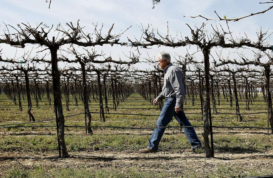 Mike Stearns, chairman of the San Luis and Delta-Mendota Water Authority, may have to stop growing wine grapes and pistachios because of water cuts from the drought. Photo: Rich Pedroncelli, AP