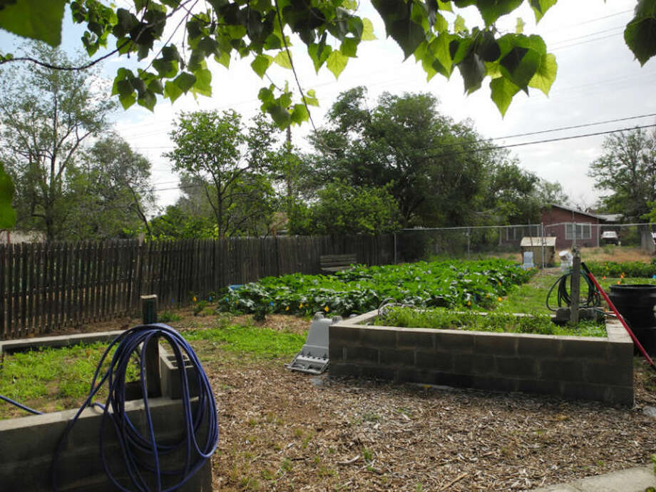 Community members can claim their own plot of land at community gardens between 10th and 11th on Baltimore Street. Photo: Gail M. Williams | Plainview Herald