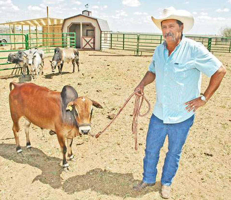 Cirildo Leal and a red mini-bull named Texas.
