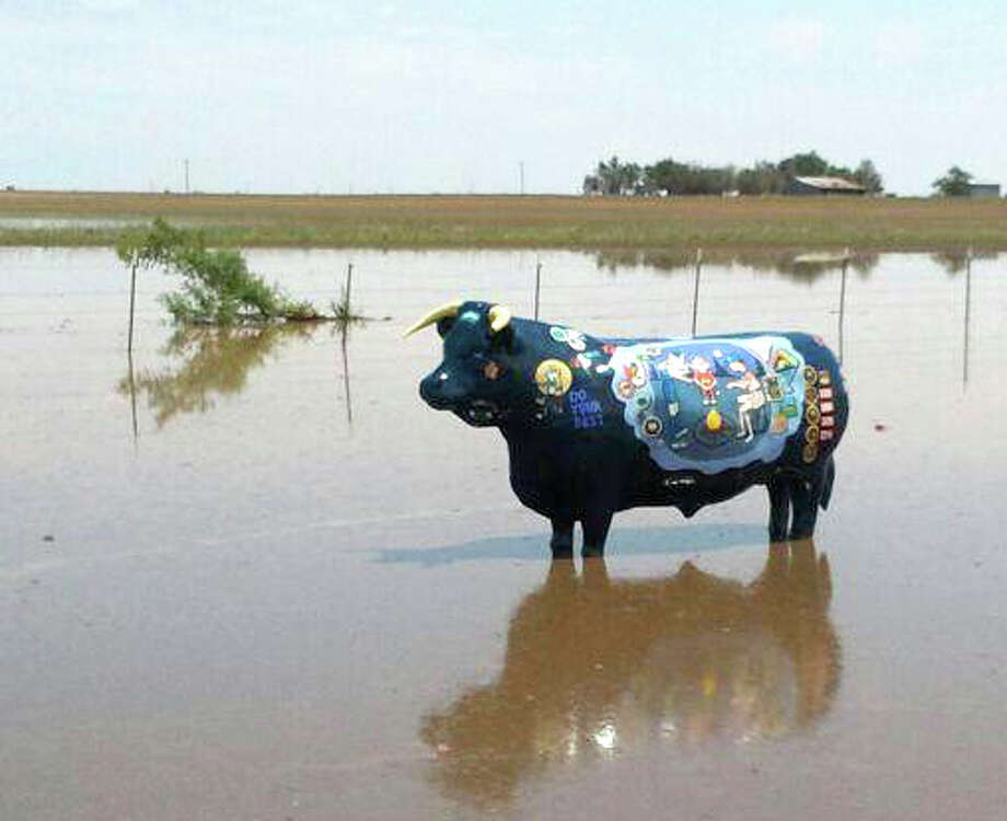 Courtesy Photo by Charles BechtoldPatches, the Cub Scouts' fiberglass cow, stands knee-deep in water after Wednesday morning's thunderstorm. While Plainview received just 0.38 inch of rain from the storm, more than an inch of rain was recorded where Patches is located, south of the Ebeling Addition at U.S. 70 and Sun Road.