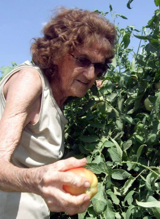 Pearl Brymer once thought the three tomato plants at her Seth Ward residence wouldn't survive, but they've since grown to close to 7-feet tall. The 85-year-old Brymer said she didn't use any fertilizer on the plants, just lots of well water. Once the plants outgrew their support cages, they were anchored to nearby buildings. Brymer, her husband Willard and many of their neighbors are enjoying a wealth of tomatoes.