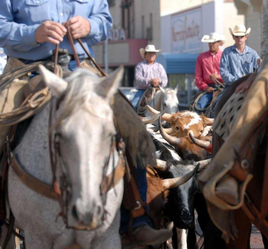 Cowboys drive a herd of Longhorns down Broadway as part of last year's Down Ol' Broadway Cattle Drive, during the annual Cowboy Days Celebration. Photo: Richard Porter/Plainview Herald