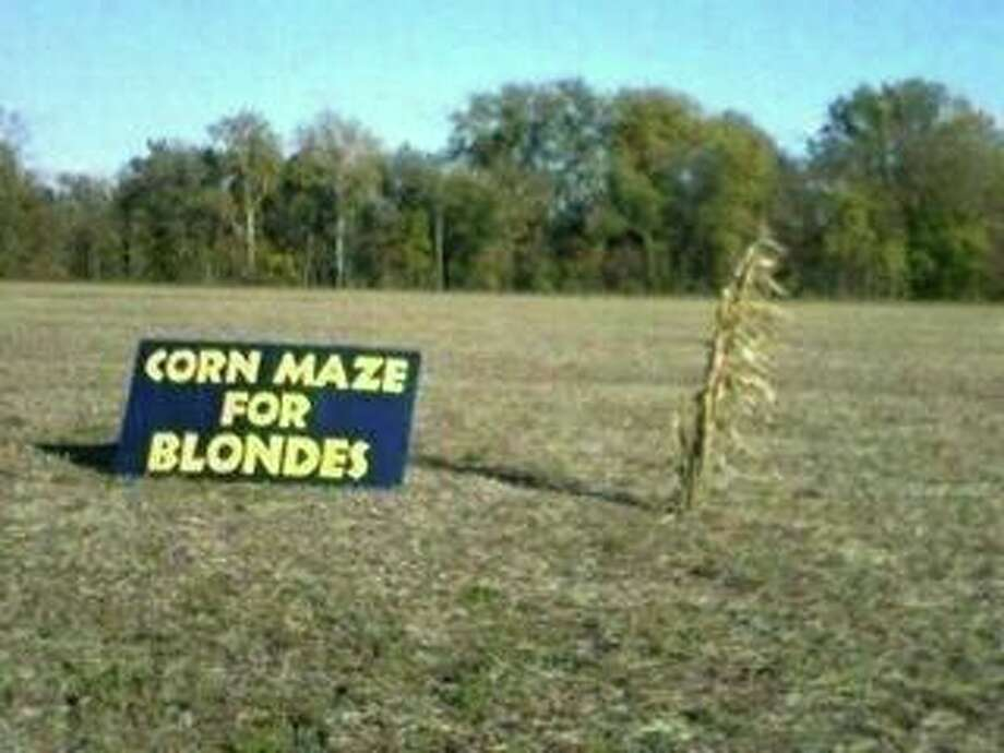 Corn maze for blondes.