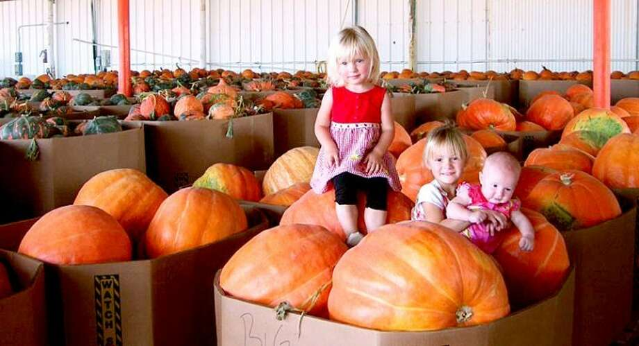 Pumpkin farming in the Pyle family has involved four generations. Here, the three daughters of Jason and Lindsey Pyle - Kirsten, Madison and Brooklyn - play in a warehouse full of giant pumpkins. Photo: Courtesy Of Floydada Chamber Of Commerce