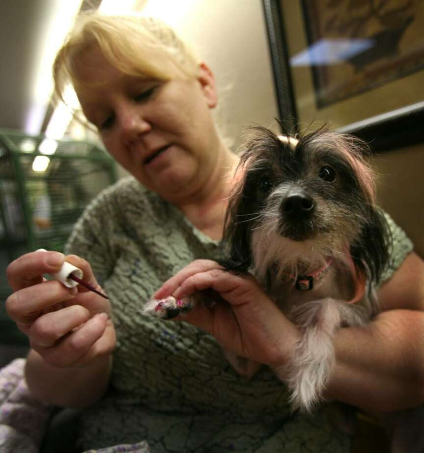 No cutbacks for region\'s pampered pets - Connecticut Post
