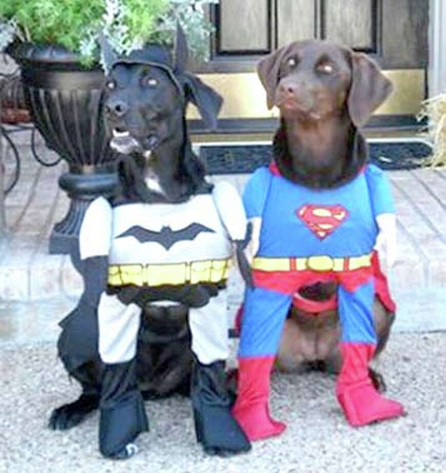 You've Got Mail offers e-mails received by Plainview Herald staffers.Halloween costume for dogs.