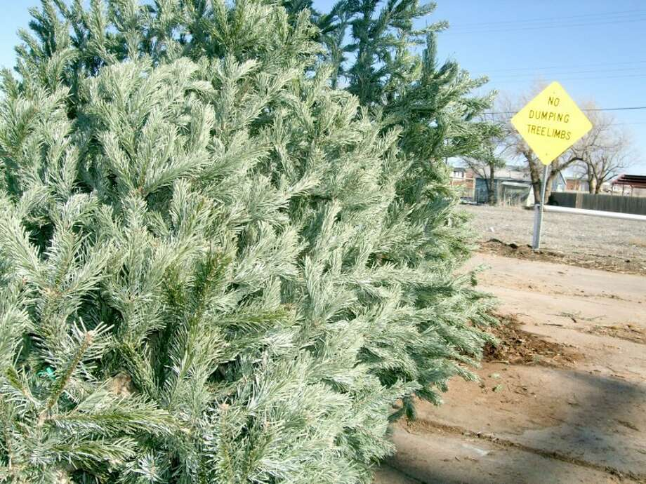 Although a sign at Second and Columbia discourages dumping tree limbs, entire trees are permitted - at least while this location serves as one of five places where Plainview residents can leave their live Christmas trees. Other drop-off locations are Fourth and Floydada (Kidsville area), 16th Street pool parking lot, Garland and Kermit (in Westgate) and 18th and Galveston.