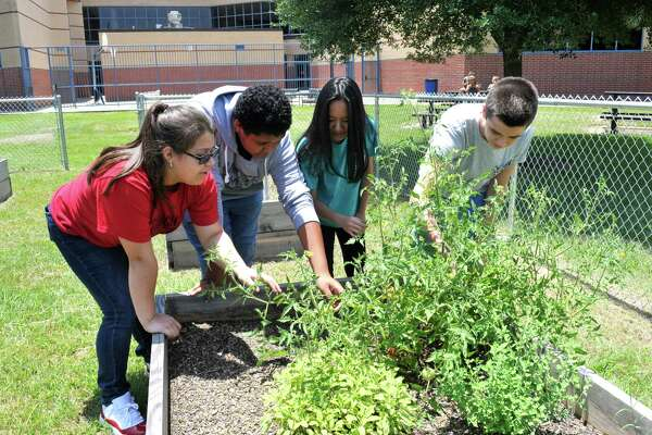 Hamilton Middle School eighth-graders Angelique Vaca, left, Louis Meza, Tina Nguyen and Griffin Hawkins, get a close look at tomato plants that students grew in the school garden. The school has plans to expand the program in the upcoming school year.Hamilton Middle School eighth-graders Angelique Vaca, left, Louis Meza, Tina Nguyen and Griffin Hawkins, get a close look at tomato plants that students grew in the school garden. The school has plans to expand the program in the upcoming school year.