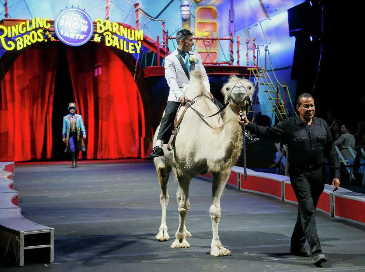 XTREME High Wire Walkers, Mustafa Danguir and Anna Lebedeva, of Ringling Bros. and Barnum & Bailey® exchanged wedding vows 30 feet above the NRG Stadium floor on a high wire that is no wider than a human thumb. Ringmaster David Shipman officiated alongside clowns, camels, horses, aerialists and acrobats.