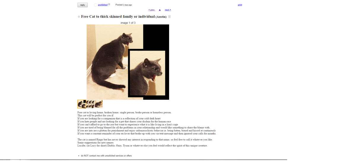 Ringo the cat has been put up for adoption in Austin for his unique personality. Any thick-skinned or soulless person would be lucky to have him, according to the ad. However, not all cats are created equal. Take a look through the gallery to see less threatening cats looking confused in adorable costumes.Photo: Craigslist Listing Screen Shot