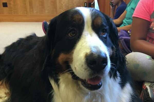 Otis was one of four therapy dogs who was read to by children at Byram Shubert Library on July 27.