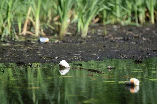 Large deposits of silt have slowly built up, catching litter and becoming a constant eyesore in the Binney Park pond in Old Greenwich, Conn. Tuesday, July 26, 2016. The town has been talking about dredging the pond to remove the silt and grabage sometime in the near future.