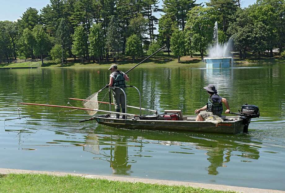New York State Department of Environmental Conservation workers Katherine Sessions, left, and Scott Wells look for an alligator gar in the lake at Central Park on Wednesday, July 27, 2016 in Schenectady, N.Y. A fisherman had caught and released the large fish with sharp teeth. (Lori Van Buren / Times Union) Photo: Lori Van Buren / 20037466A